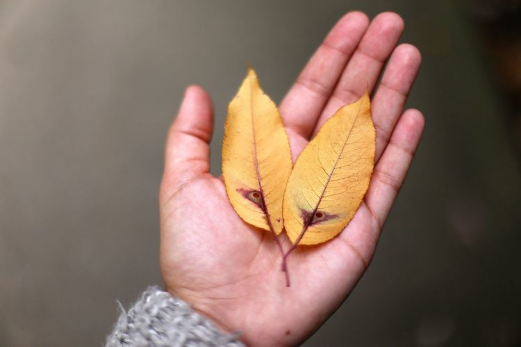 autumn details in Shelter Island NY Autumn Autumn Change Close-up Day Discovery Fall Fragility Hand Holding Holding On Human Body Part Human Hand Leaf Leaf In Hand Maple Leaf Nature One Person Outdoors Real People Seasonal Photography Yellow Leaf