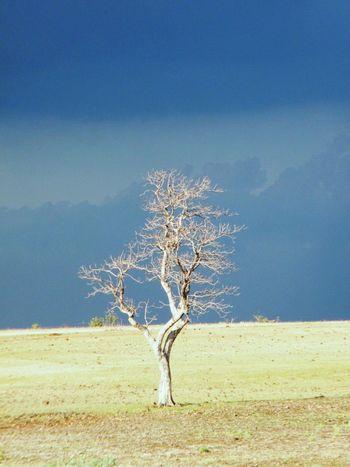 Tree Deadtree Nature