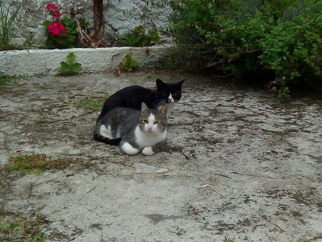 Sleepy cats Cats Catlovers Catoftheday