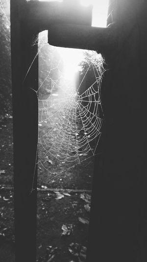 Spider Web 🕸🕷