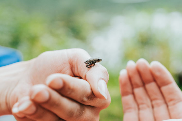 Close-up of hand holding small frog