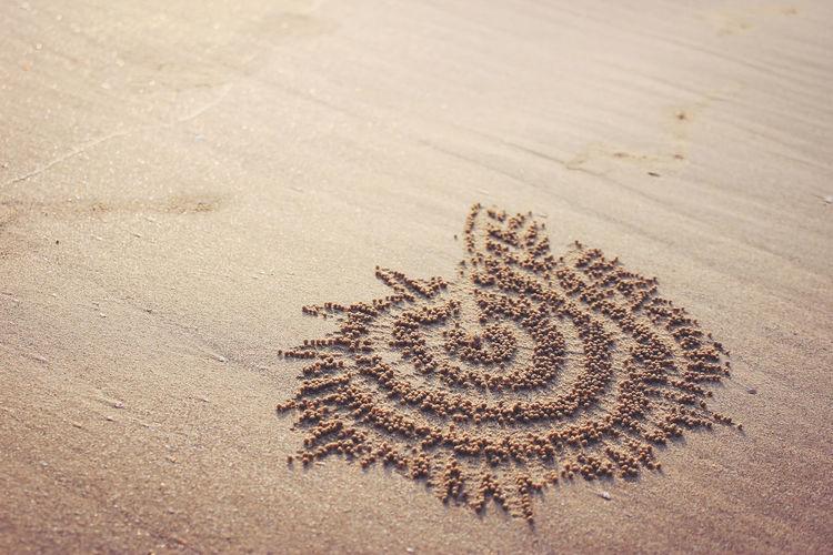 Land Sand High