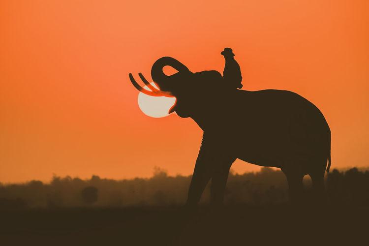 Silhouette of elephant on field against orange sky