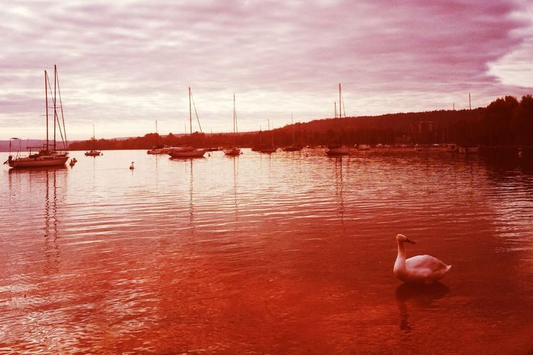 the last Martian Hipstamatic Lago Maggiore Swan