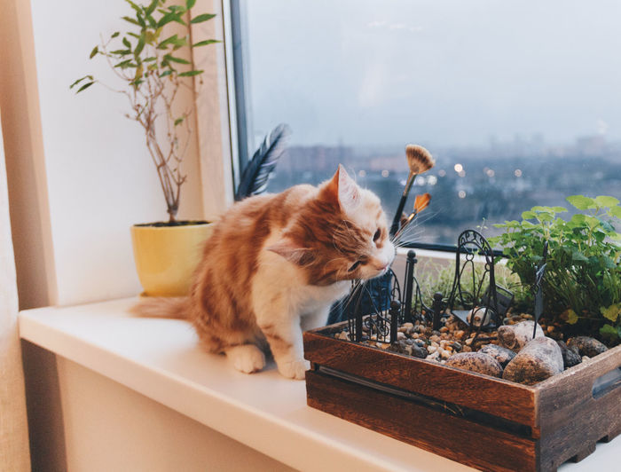 Red Red Cat Red Kitten Animals Pets Funny Cute Love New Home Eating Indoors  No People Plant Nature Domestic Room Day Sitting Mammal