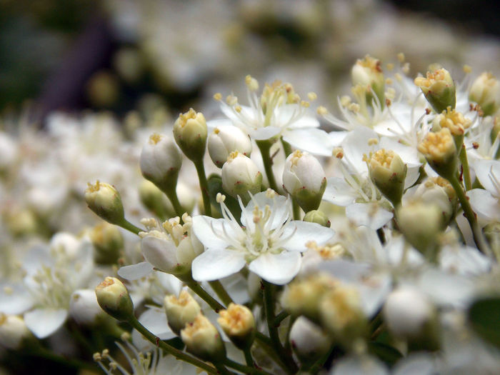 Beauty In Nature Blossom Botany Close-up Flower Flower Head Fragility White White Color Beautiful Beautiful Nature EyeEm Nature Lover EyeEm Flower Close Up Wildflowers Wildlife & Nature