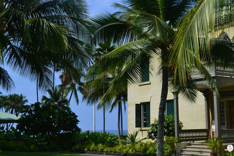 Architecture Beach Big Island Big Island Hawaii Building Exterior Built Structure Green Color Hawaii Kailua  Kailua Kona♥♡♥ Kailua-Kona Lawn Outdoors Palm Tree