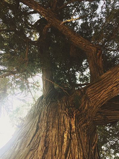 tree By Lemonni