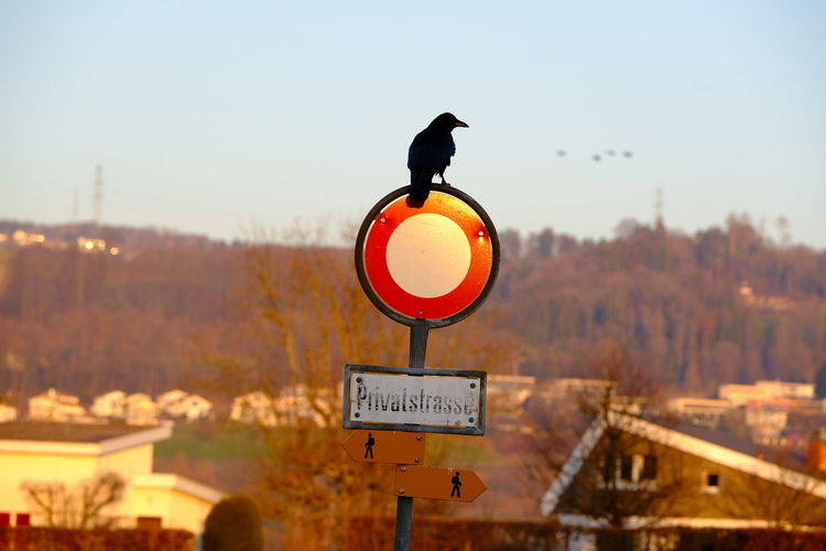 Sign Communication Sky Road Sign Focus On Foreground Nature Animal Themes Text Day Animal Information One Animal Vertebrate Bird Tree No People Road Guidance Outdoors Clear Sky