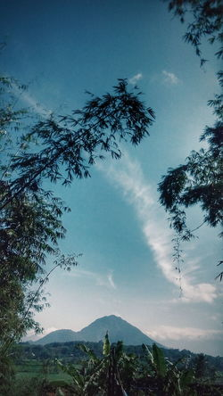 Why I'm so Lonely Relaxing Nature Green Leaf Taking Photos Relaxing Enjoying Life Mountain View Sky Clouds Photo Photography Photoshoot Mountain Photooftheday Smartphonephotography Panorama Jawabarat Mobile Photography Garut INDONESIA Travel Natural