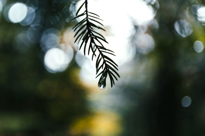 autumn Tree Nature Close-up Pinaceae No People Beauty In Nature Outdoors Nature Photography POV Eyem Best Shots Eyembestshots Explore Lowlightleague EyeEm Nature Lover EyeEm Best Shots Austria