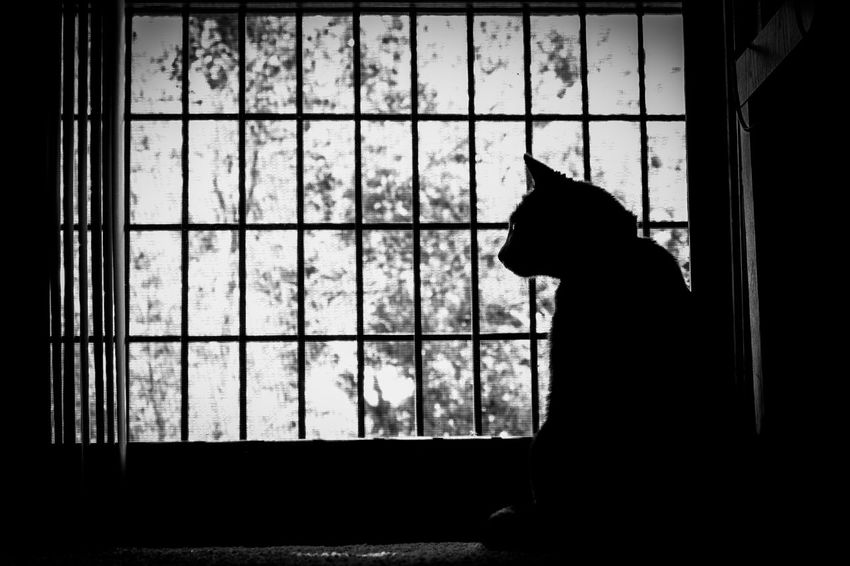 Lazy day.. but always watching. Black Black Color Blackandwhite Cat Dark Day Kitty Mammal No People Pets Silouette Window Window Sill