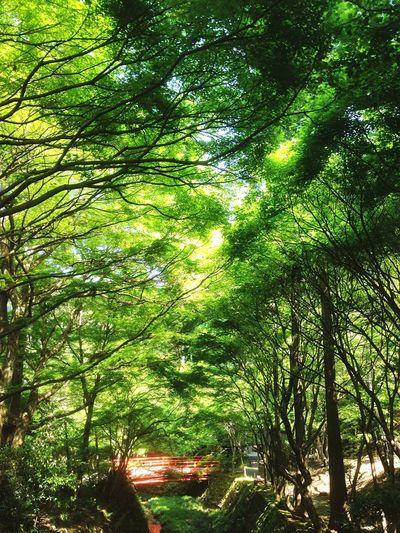 Kyoto Japan Sanzenin Green Sanzen In Bridge Tunnel Today 京都 日本 大原三千院 緑のトンネル 今日