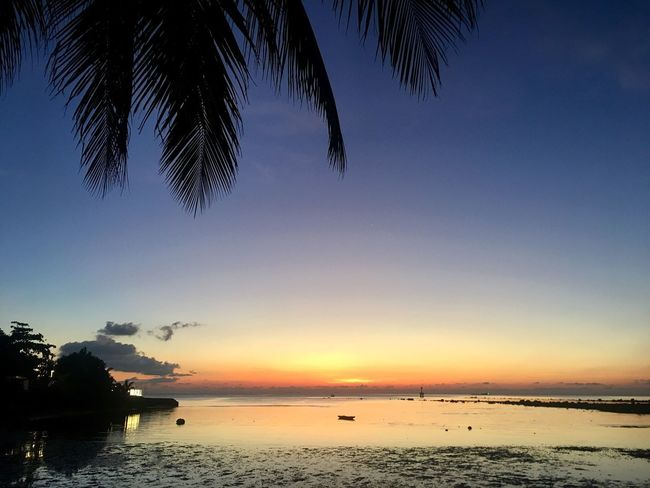 Sky Sunset Water Beauty In Nature Scenics - Nature Silhouette Tree Sea Nature Outdoors No People Beach Palm Tree Orange Color Idyllic Palm Leaf