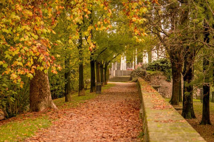 Autumn in a