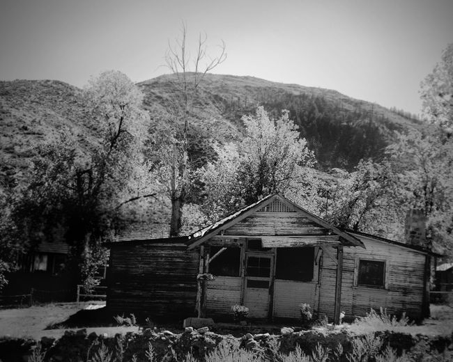 Black & White Abandoned Architecture Bare Tree Blackandwhite Photography Building Exterior Built Structure Cabin Clear Sky Day Ghost Town Gold Rush Era Growth Mountain Nature No People Outdoors Plant Sky Tree Vintage Photo