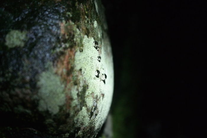 Close-up Drop Of Water Focus On Foreground Moon Landscape Moss On Stone Nature Nightphotography No People