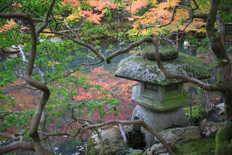 toro, japanese stone lamp and garden view Kyoto Place Of Worship Garden Photography Japan Photography Japan ASIA Scenes Tranquility Lake View Lake Maple Leaf Fall Autumn Growth Nature Shrine Religion Beauty In Nature Japanese Garden No People Stone Lamp Toro Red Color Reflection In The Water