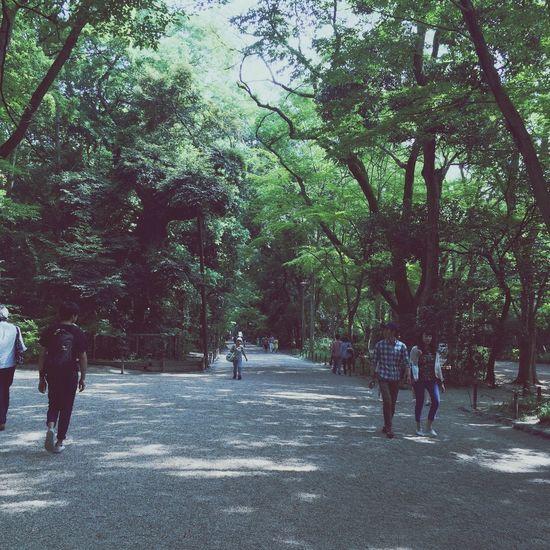 Natural Green Beautiful Good Times Enjoying The Sun Sunny Day Kyoto