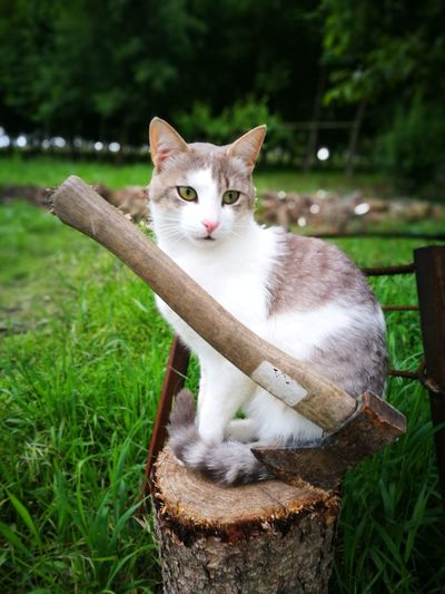 Bad cat 😂 Badcattitude Bad Cat Sitting Ear Looking At Camera