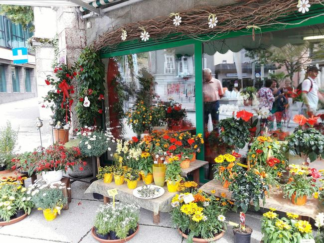 Enjoying Life Badischl Flower Collection Plantsforsale Flowershop Display Flowers Pretty Outdoors