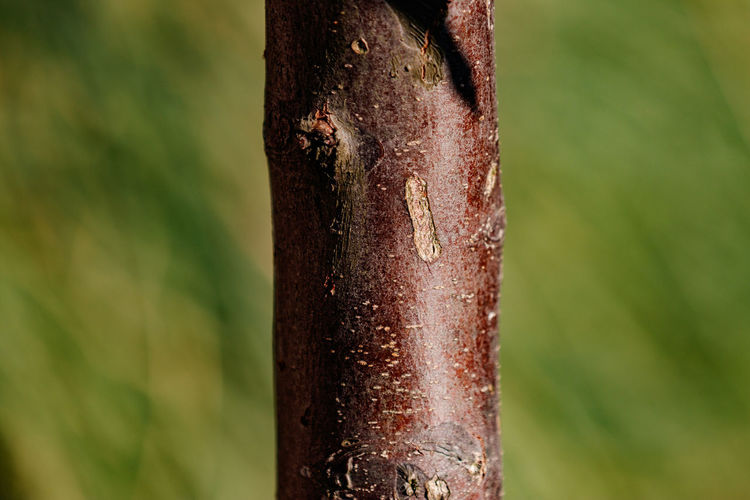 Close-up of bamboo on tree trunk