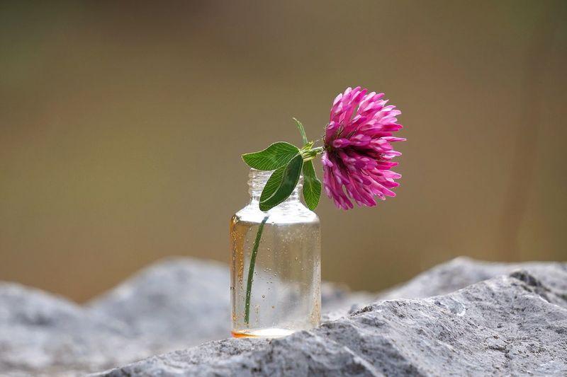 Close-Up Of Purple Flower In Bottle On Rock