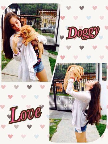 ?❤️ Doggy Love Puppy Sharpei Best Friend