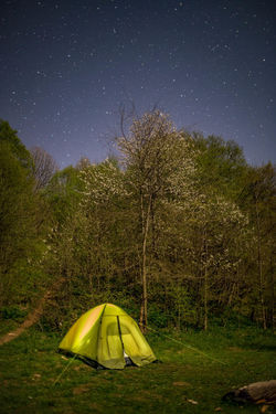 Astronomy Beauty In Nature Camping Field Green Color Land Nature Night No People Outdoors Plant Scenics - Nature Sky Space Star Star - Space Tent Tranquil Scene Tranquility Tree Yellow
