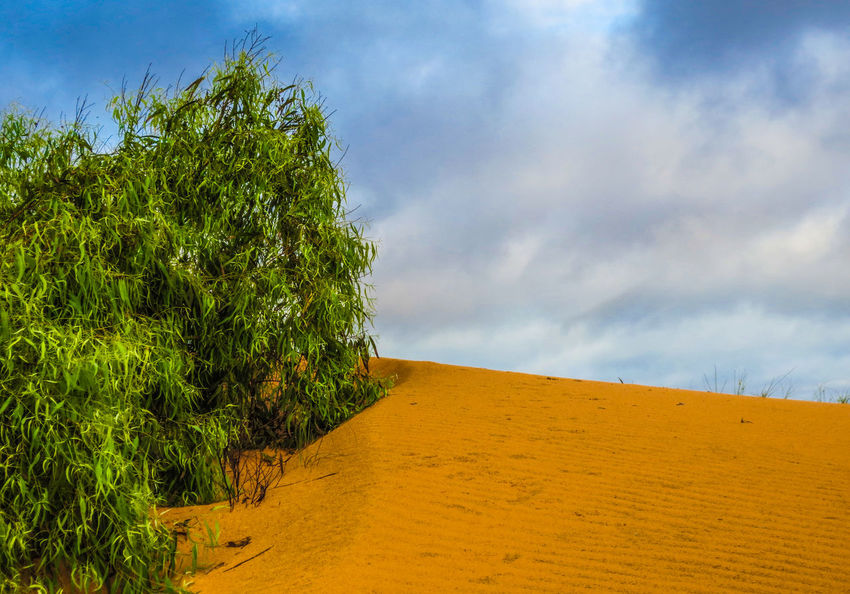 Lompoul Desert Cloud - Sky Sky Plant Landscape Environment Scenics - Nature Land Nature Sand Beauty In Nature Tranquil Scene Tranquility Tree No People Day Blue Sand Dune Outdoors Green Color Growth Lompoul Lompool Desert Senegal Africa