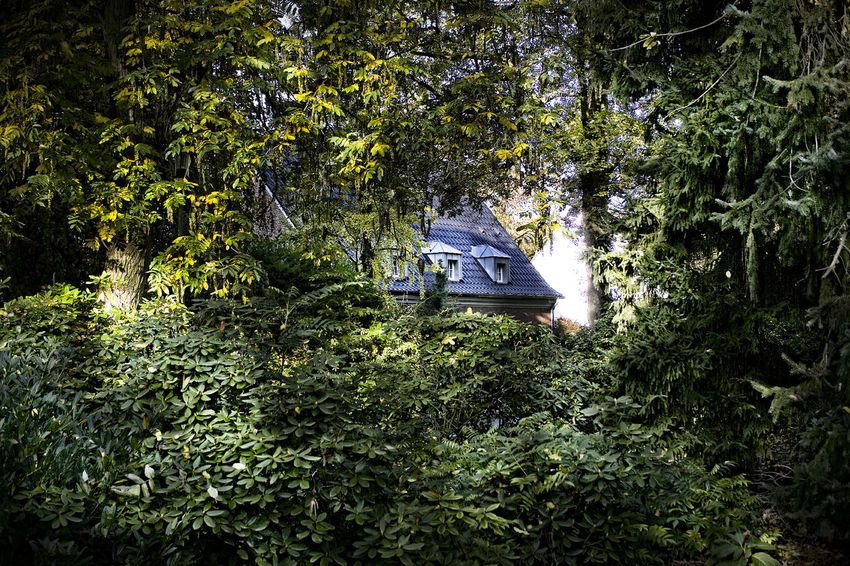 Haus im Wald Beauty In Nature BOS Green Color Growth Holiday Nature Nature Nautical Vessel No People Outdoors Scenics Sunlight Tranquil Scene Tranquility Tree Wald Wouden