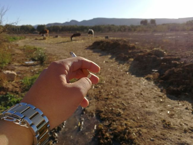 Human Body Part One Person Human Hand Holding Personal Perspective Real People People Fingernail One Woman Only Day Nail Polish Animals In The Wild Close-up Outdoors Mammal Nature Oujda City, Morocco Oujda Tourism Love Loneliness Morocco Nature Sky