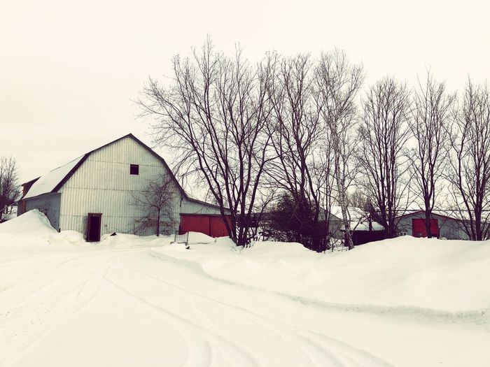 Bare trees on snow covered field by houses against sky