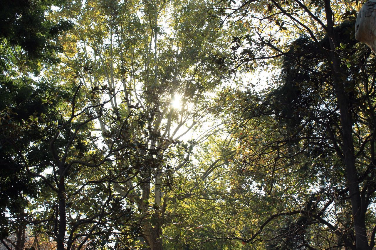 tree, nature, forest, growth, low angle view, beauty in nature, branch, day, tranquility, no people, outdoors, scenics