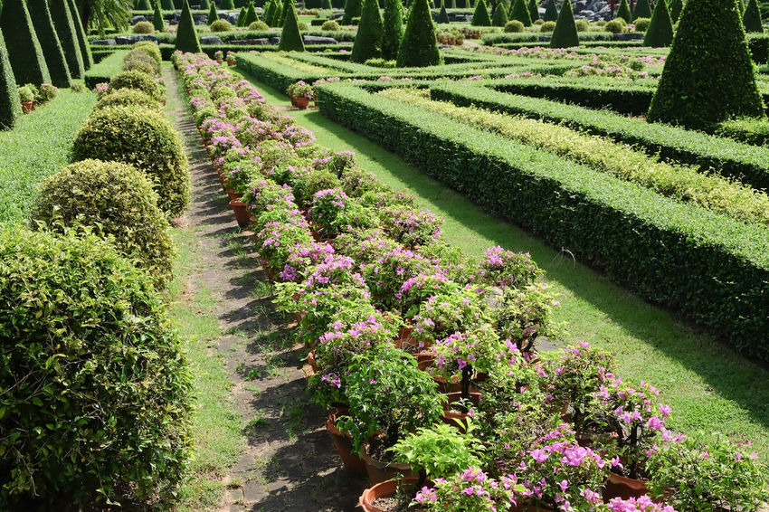 Garden path with topiary landscape background Garden Path Beauty In Nature Day Flower Flowerbed Garden Photography Grass Green Color Growth Landscape Nature No People Outdoors Plant Topiary Topiary Garden Topiarygarden