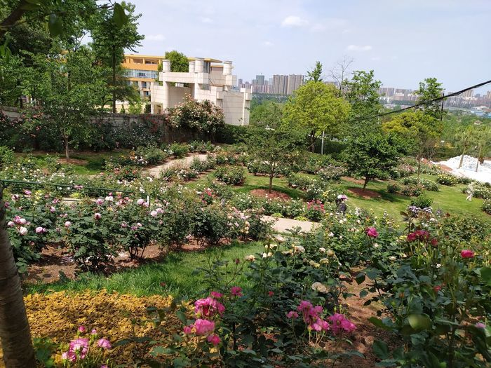 Flowering plants and trees in park against sky