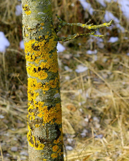 Beauty In Nature Close-up Day Focus On Foreground Lichen Nature No People Outdoors Textured  Tranquility Tree Tree Trunk