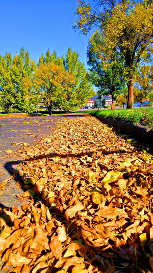 Fall Leaves Skyline Check This Out Taking Photos Montanaphotography BigSkyCountry Street Portrait
