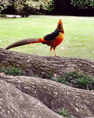 Bird Outdoors Grass Nature EyeEmNewHere The Week On EyeEm EyeEm Best Shots EyeEm Selects Feathers❤️ Freedom Birds🐦⛅ Perching Parrots Borromean Islands Italia Plumage Colorful Posing For The Camera !