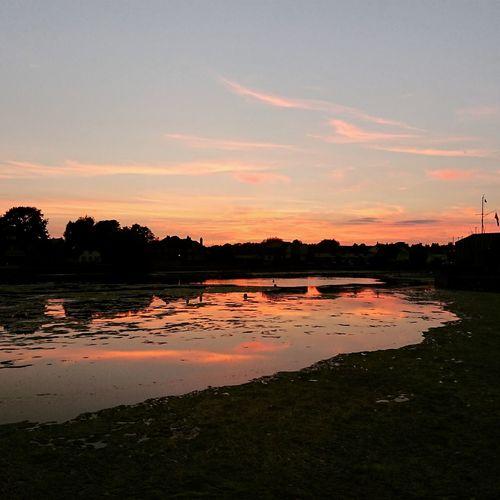 Water Tree Sunset Lake Reflection Sky Landscape Cloud - Sky Low Tide Romantic Sky Dramatic Sky