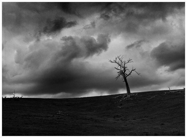 Tree on hill black white black and white photography blackandwhite sky no people cloud