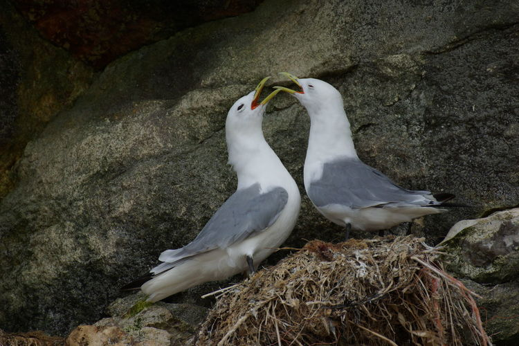 White bird perching on shore