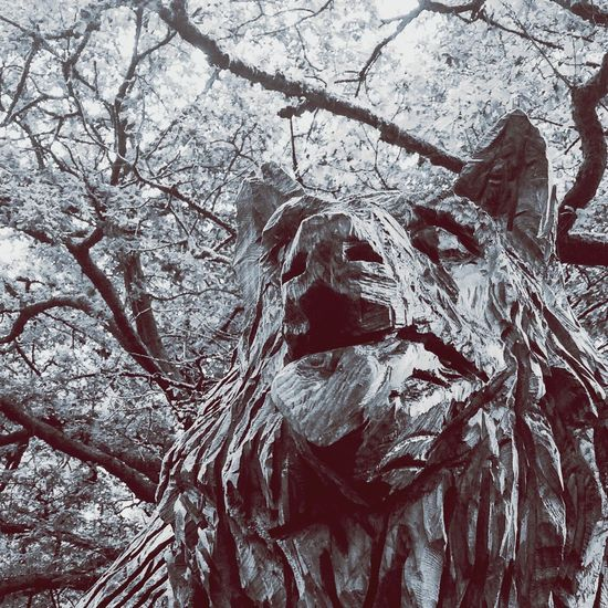 Wolf Carving Wild Wood Little Red Riding Hood