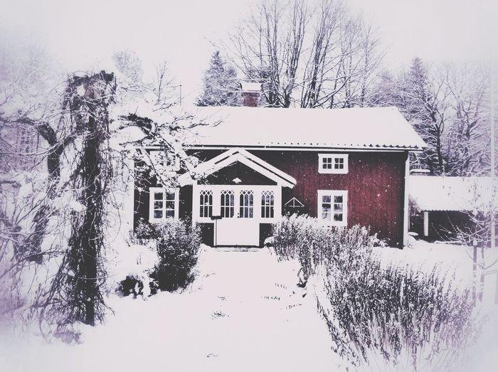 Winter wonderland! Winter Old House EyeEm Nature Lover Inlaws