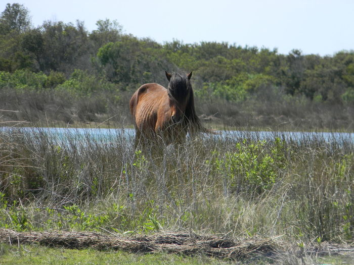 EyeEmNewHere Animals In The Wild Water One Animal No People Beauty In Nature Grass Wild Horse On The Beach Tranquility Nature Scenics Day Landscape