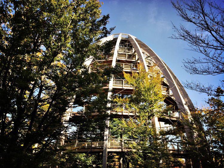 Hanging Out EyeEm Nature Lover Nationalpark Bayerischer Wald Bavaria Treetopwalk Baumwipfelpfad Architecture