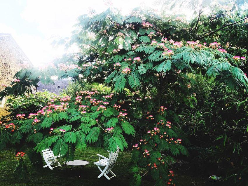In The Garden Dans Mon Jardin Jardin Albizia Chaises