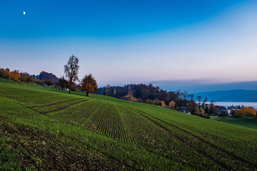 Landscape Agriculture Sky Scenics - Nature Field Plant Rural Scene Land Environment Tranquil Scene Beauty In Nature Growth Tranquility Farm Nature Crop  Tree Green Color No People Idyllic Outdoors Plantation