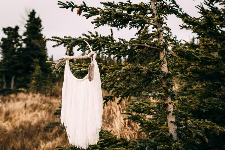 Decoration hanging from tree