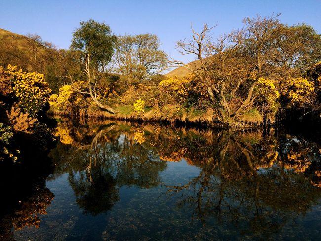 Magical Scotland Isleofarran Nature_collection Reflections ✨
